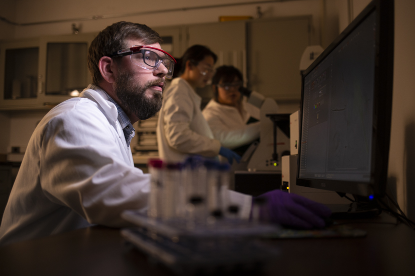 A graduate student examines microscope scans of a compound