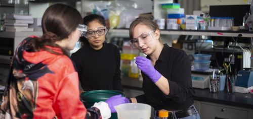 Three undergraduates examine droplets of plastic eating algae in a lab.