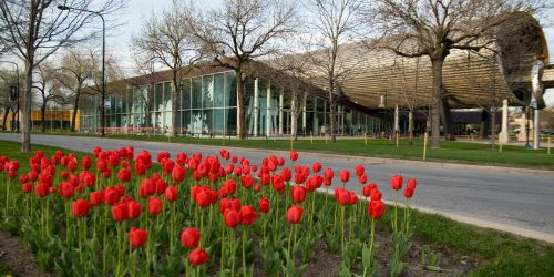 MTCC building with tulips along street